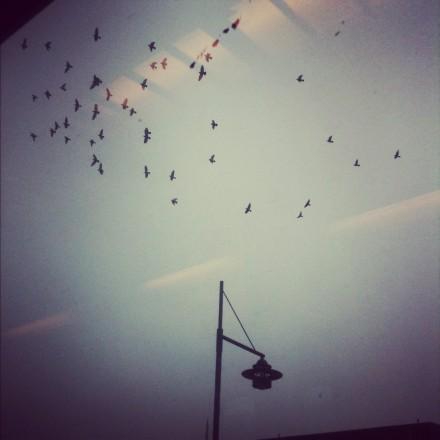 Small Swedish birds