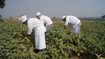 Vedatya chefs in the farm.